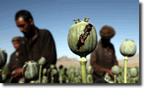 Heroin Opium Production
